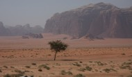 Wadi Rum near Lawrence Spring