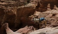Petra Stair and Donkey